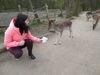 Familienspaß Wildpark, Foto: Stadt Frankfurt