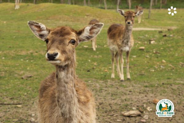Wildpark Frankfurt (Oder), Foto: Wichern Diakonie