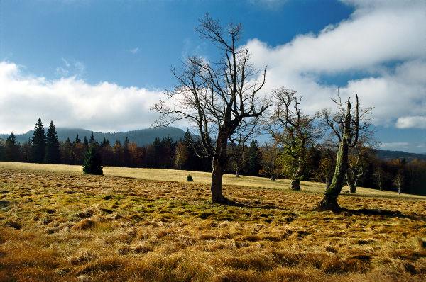 Blick auf den Almschachten im Nationalpark Bayerischer Wald