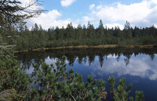 Der Latschensee im Hochmoor Schluttergasse im Nationalpark Bayerischer Wald