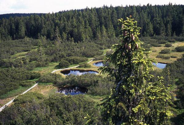 Blick auf das eindrucksvolle Hochmoor Zwieselter Filz im Nationalpark Bayerischer Wald