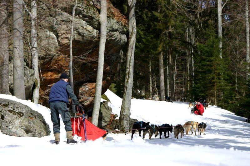 Schlittenhundegespann des Waldschrat bei Frauenau unterwegs