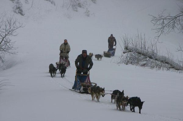 Schlittenhunde im tief verschneiten Winterwald bei Frauenau