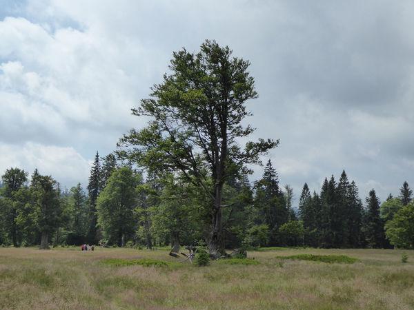 Der Kohlschachten im Nationalpark Bayerischer Wald