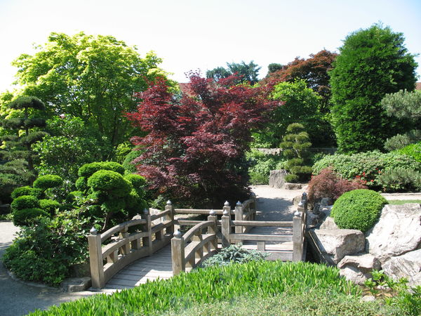 Japanese Garden in the