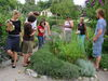 Medicinal herb tour at the Oekostation Freiburg