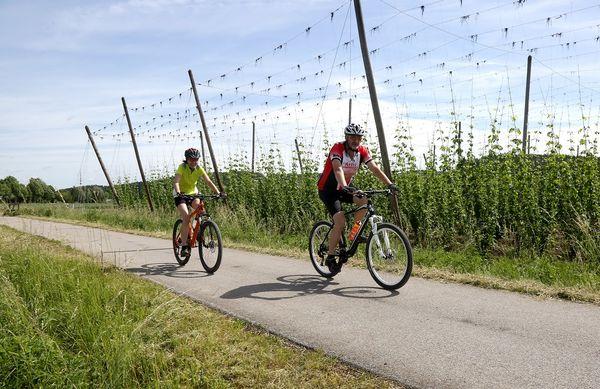 Radweg vorbei an Hopfengärten in Rudelzhausen