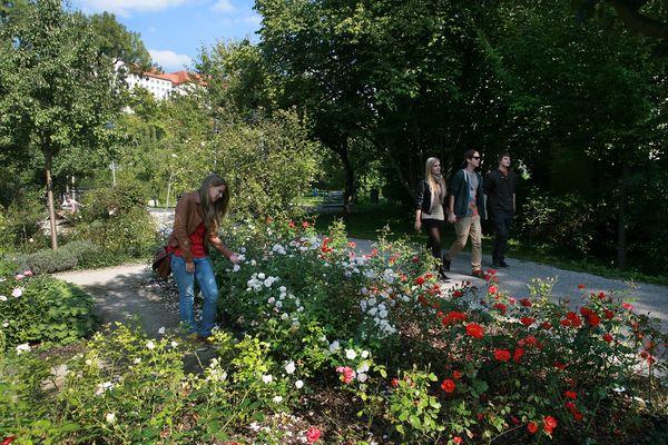 Rosenbeet im Rosengarten in Freising