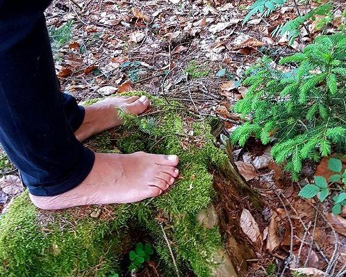Barfuß im Wald - die Natur mit allen Sinnen erleben