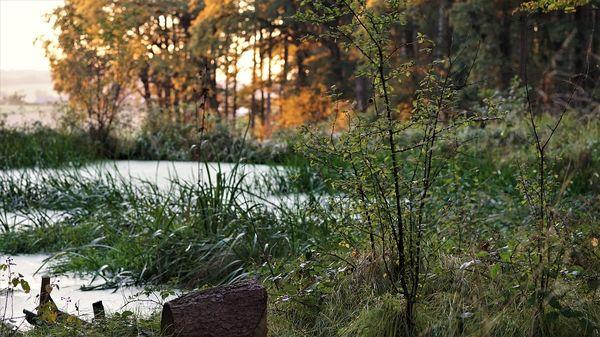 Natur bewusst erleben beim Waldbaden