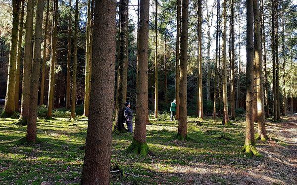 Direkter Kontakt mit der Natur beim Waldbaden