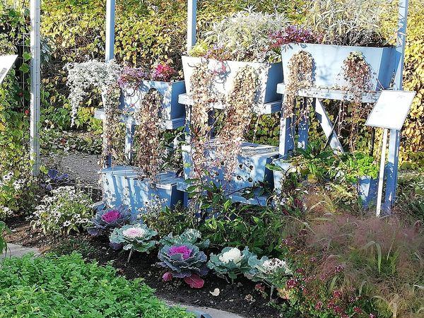 Gärten im Balkonkasten im Kleingarten der Weihenstephaner Gärten in Freising