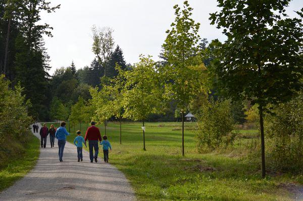 Tulpenbaumallee im Weltwald Freising
