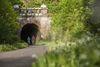 zwei Fahrradfaherer kommen aus dem Hohenhainer Tunnel gefahren