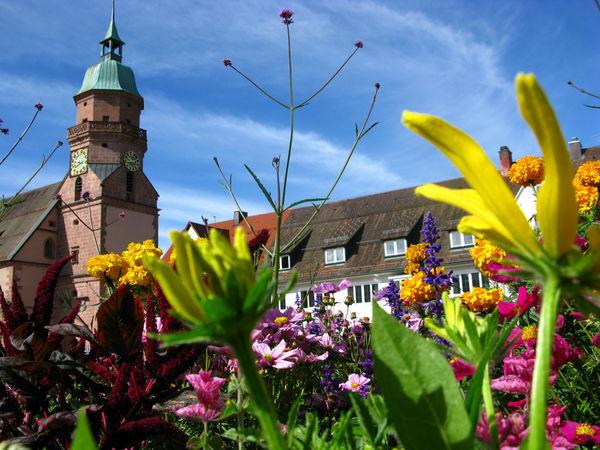 Frühlingsblumen vor der Stadtkirche