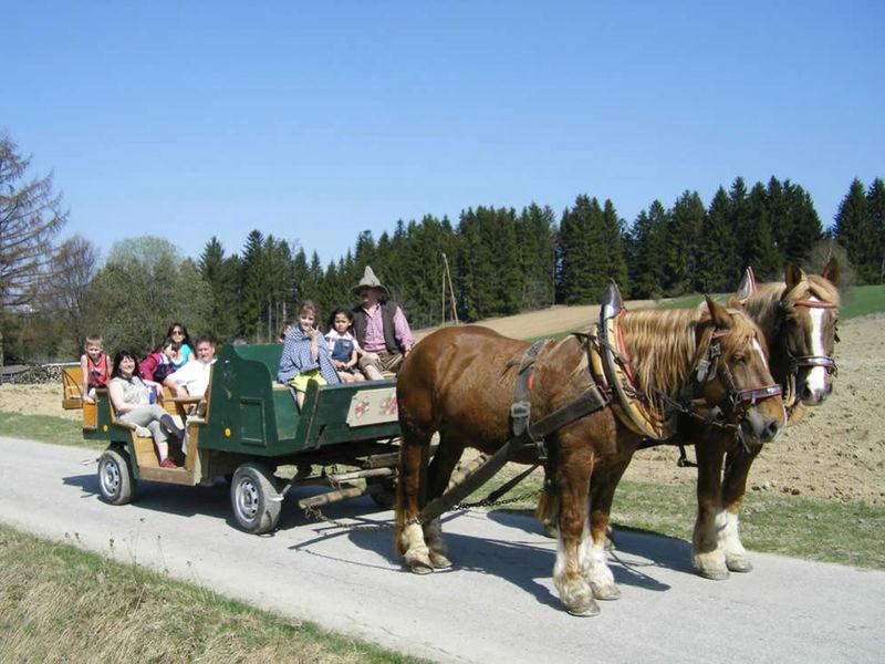 Pferdekutschenfahrt beim Sammerhof in Winkelbrunn bei Freyung