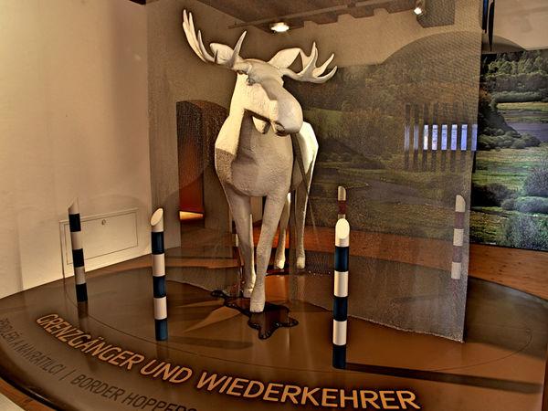 Eine imposante weiße Elchstatue im Jagd-Museum im Schloss Wolfstein