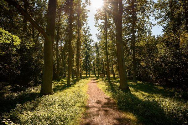 Arboretum, Foto: Stadt Eisenhüttenstadt