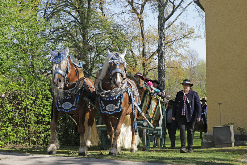 Prächtig geschmückte Pferde beim Leonhardiritt in Furth im Wald
