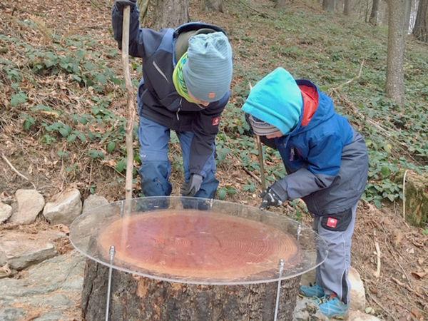 Es gibt einige spannende Details zu entdecken auf dem Walderlebnispfad in Voithenberg