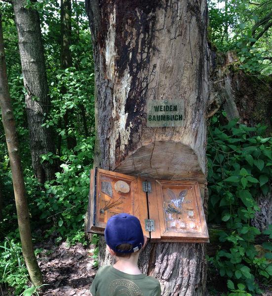 Im Weidenbaumbuch entdeckt man Interessantes & Anschauliches zur Weide