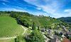 Luftbild Weinberg