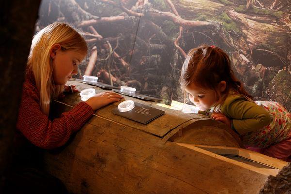 Kinder im Infozentrum Kaltenbronn
