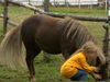 Kinderspaß bei der Wanderreitstation Golden Star Ranch bei Gotteszell