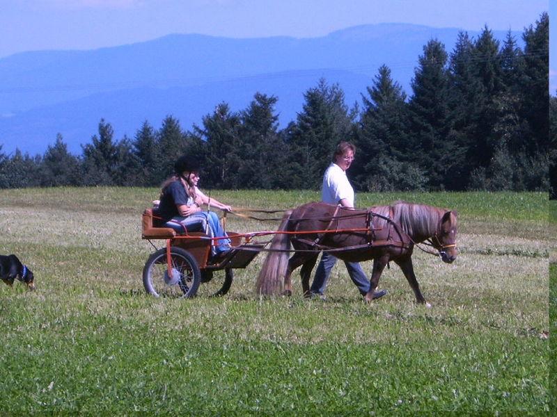Mit dem Pony bei Gotteszell im Bayerischen Wald unterwegs