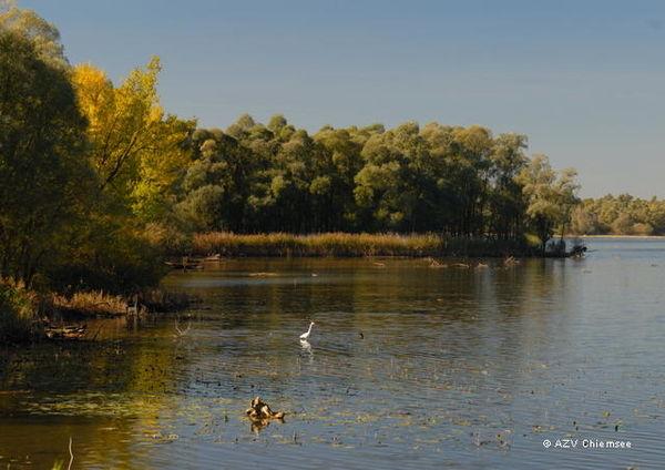 Die Uferzonen des Achendeltas: Wichtiger Rückzugsort für die Vogelwelt am Chiemsee.