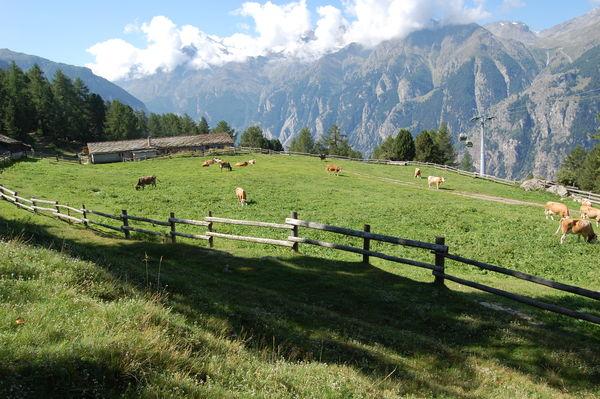 Alpe Äpnet