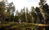 Ebiken im Bayerischen Wald