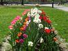 Blumenpracht im Kurpark in der Bärenstadt Grafenau im Bayerischen Wald