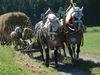 Pferdegespann mit Heuwagen beim Leonhardi-Ritt in Grafenau