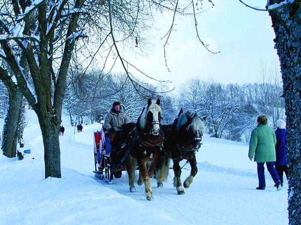 Romantische Pferdeschlittenfahrt rund um Grafenau im Bayerischen Wald