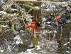 Bogenschießen am Winterparcours im Nationalpark Bayerischer Wald