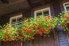 Hüsli - Blumenschmuck am Fenster