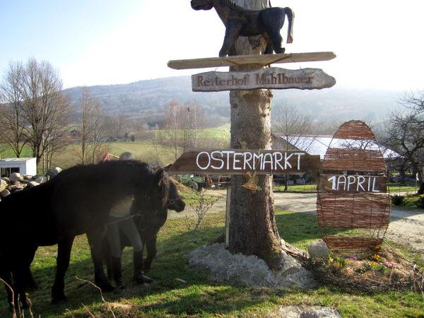 Pferde laden zum Ostermarkt auf dem Reiterhof Mühlbauer in Grattersdorf ein