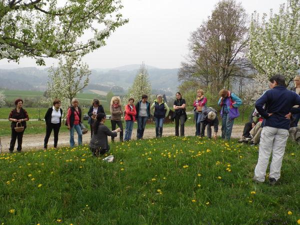 Kräuterwanderung mit der Kräuterpädagogin rund um Grattersdorf im Bayerischen Wald