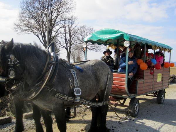 Pferdekutschenfahrt auf dem Reiterhof der Familie Mühlbauer in Grattersdorf
