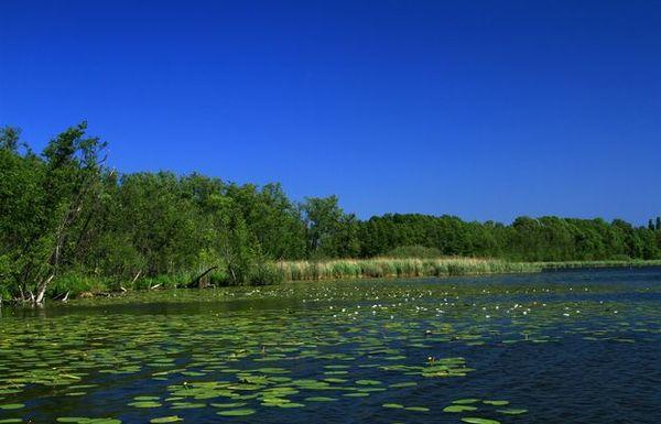Naturlandschaft Groß Schauener Seen, Foto: Heinz Sielmann Stiftung