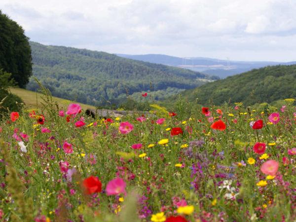 Blick über Frau Holles Blumenwiese ins Tal bei Weißenbach im Geo-Naturpark Frau-Holle-Land