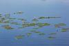 Blick auf das Wasser, Foto: Florian Läufer