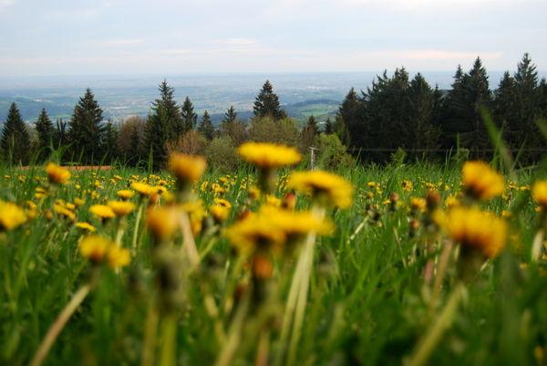 Blumenwiese am Naturlehrpfad Elisabethszell