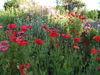 Bunte, blühende Wiesen im Schaugarten