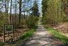 Waldweg entlang des Naturlehrpfades