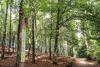Der Lebensraum Wald ist zentrales Thema