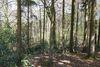 Buchenwald im Naturschutzgebiet