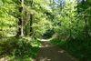 Mitten durch den Wald und die Natur führt der Trimm-Dich-Pfad