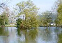 Der waldsee liegt idillisch am Waldrand richtung Mühlenbach